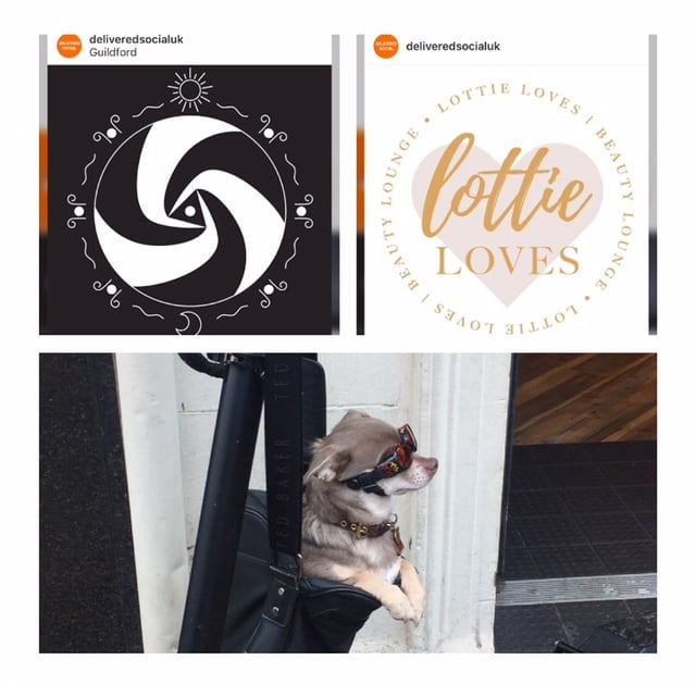 Image of logos of our visitors and a lovely little dog we found in Guildford highstreet